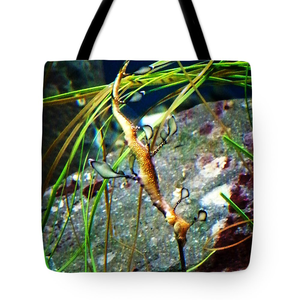 Paintings Tote Bag featuring the photograph Leafy Sea Dragon by Anthony Jones