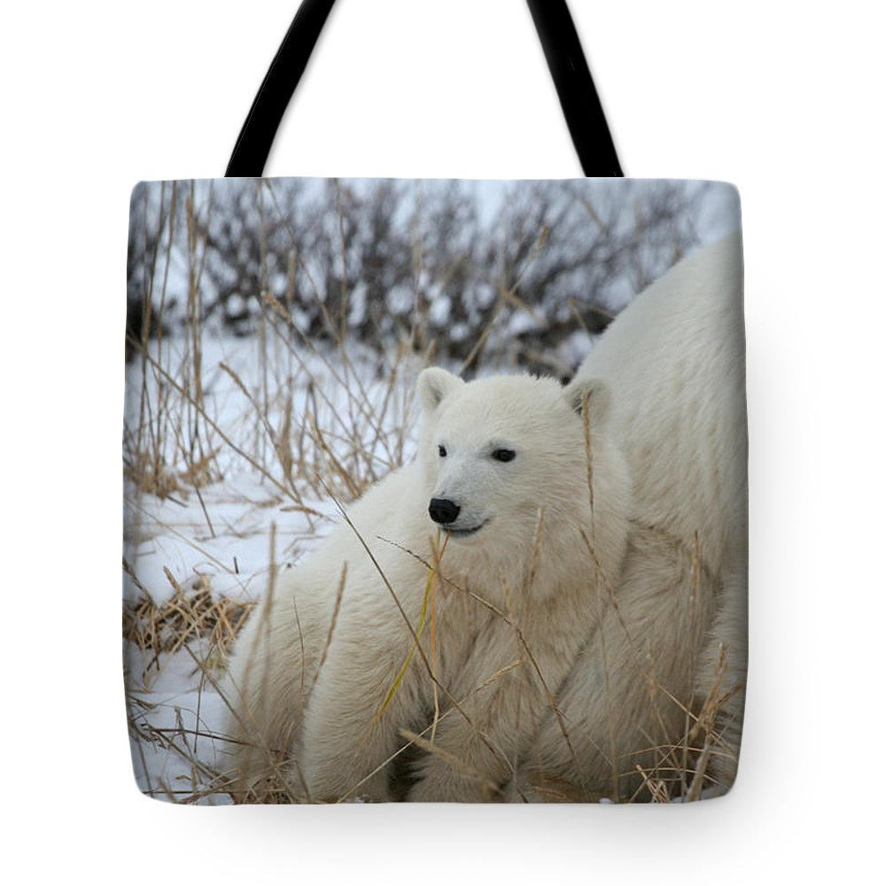 Polar Bear Tote Bag featuring the photograph Lean On Me by Connie Jeffcoat