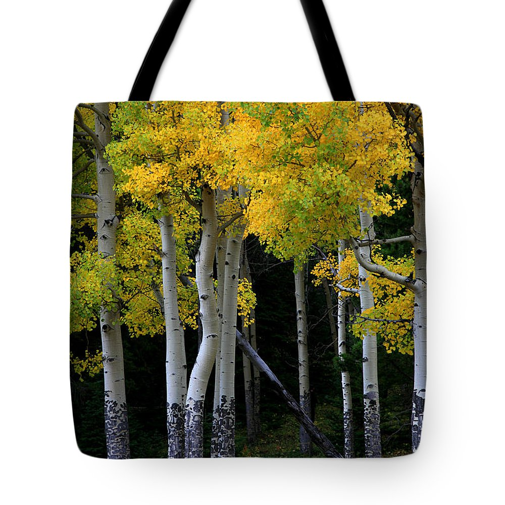 Aspens Tote Bag featuring the photograph Leaning Aspen by Timothy Johnson
