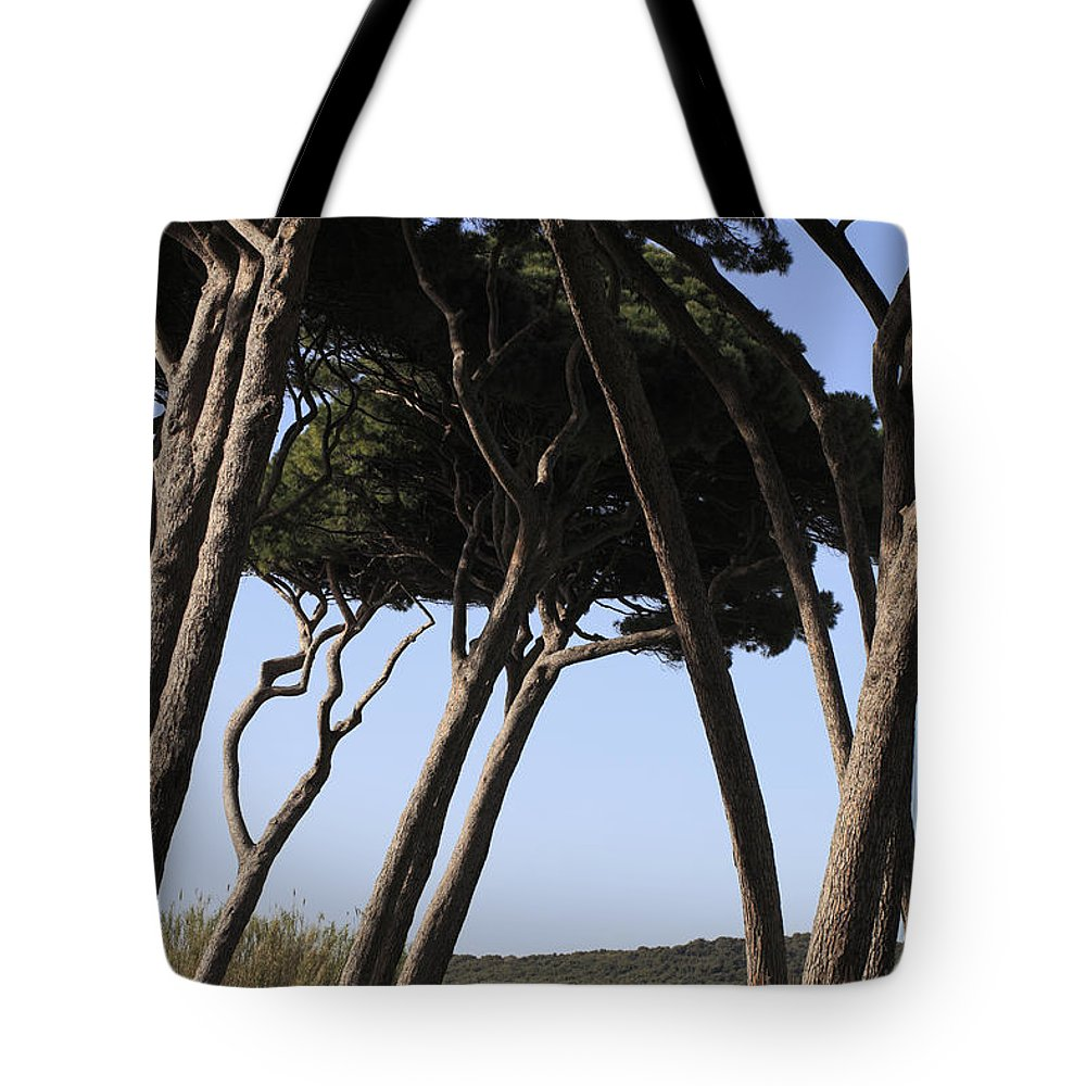 Beam Tote Bag featuring the photograph Leaning Pine Trees by Stefania Levi