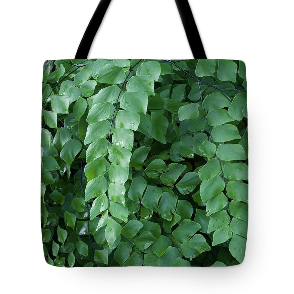 Leaves Tote Bag featuring the photograph Leaves Cascading by Margaret Fronimos