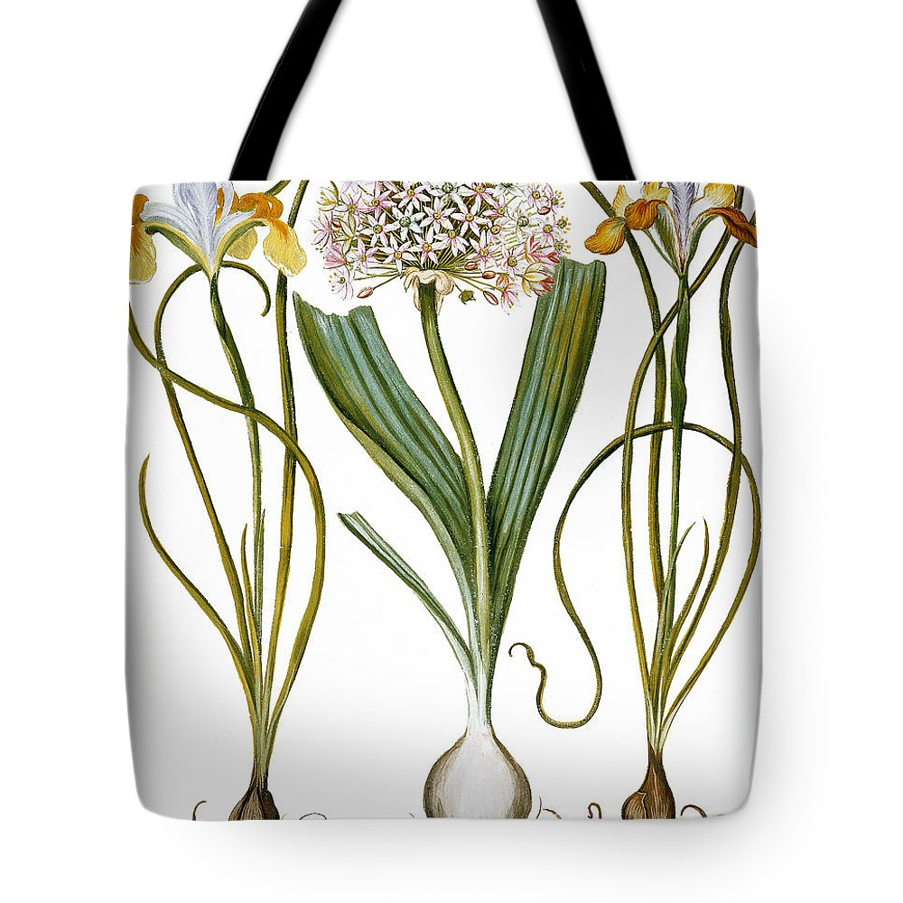 1613 Tote Bag featuring the photograph Leek And Irises, 1613 by Granger