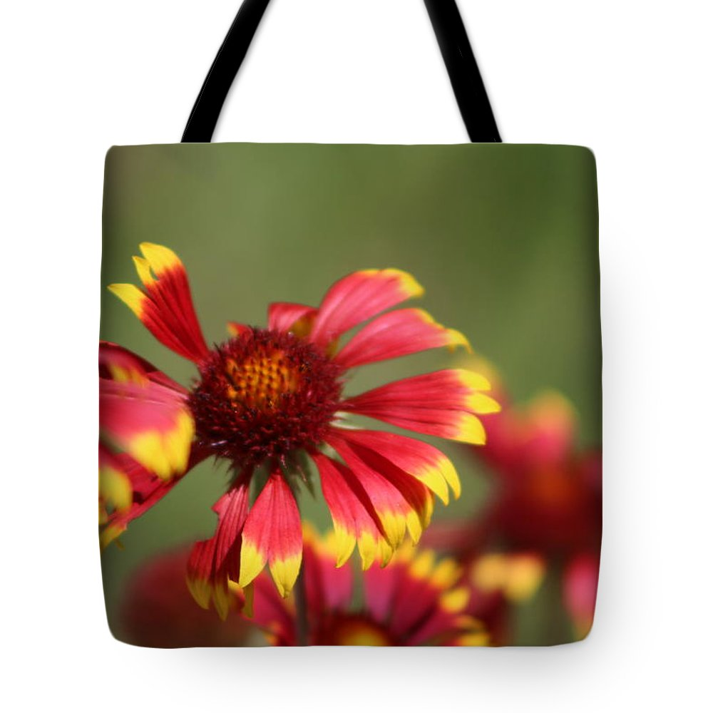 Coneflower Tote Bag featuring the photograph Lemon Yellow and Candy Apple Red Coneflower by Colleen Cornelius