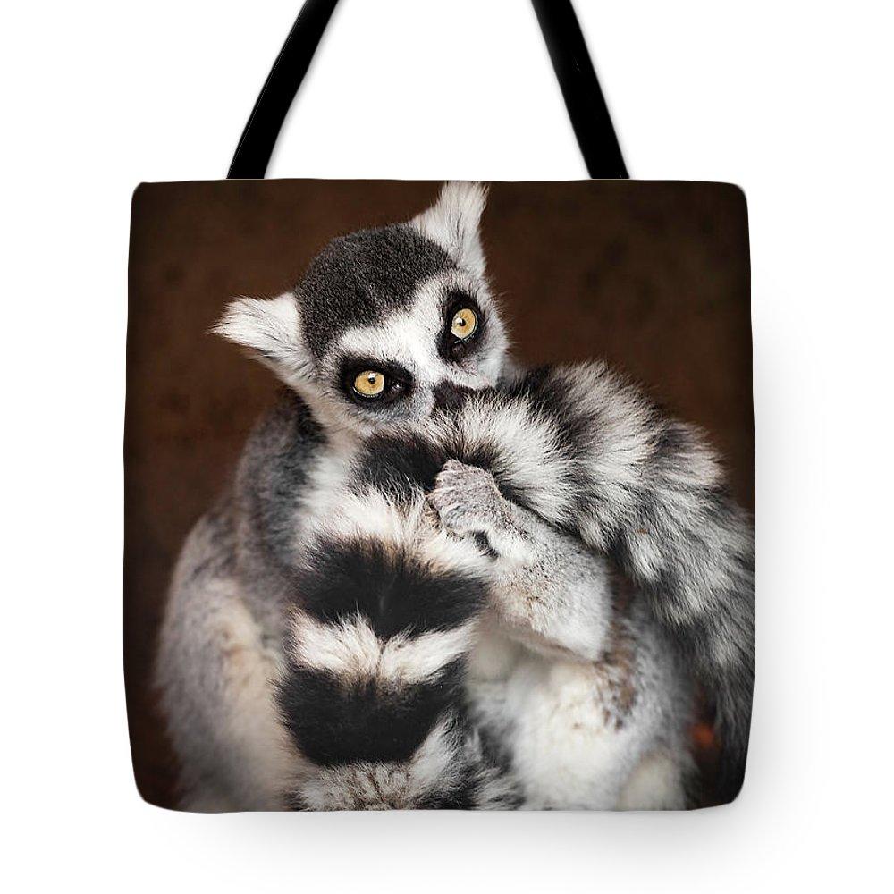 Lemur Tote Bag featuring the photograph Lemur by David Williams