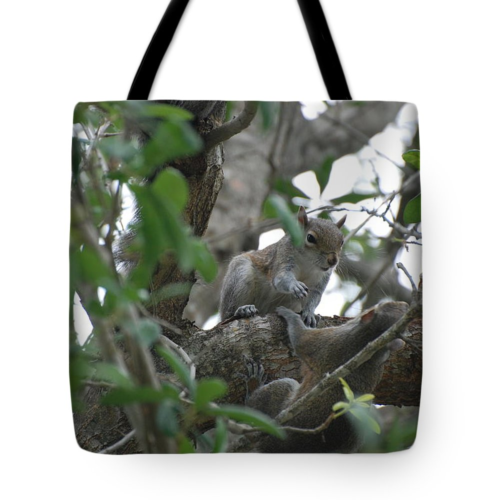 Squirrel Tote Bag featuring the photograph Lending A Helping Hand by Rob Hans