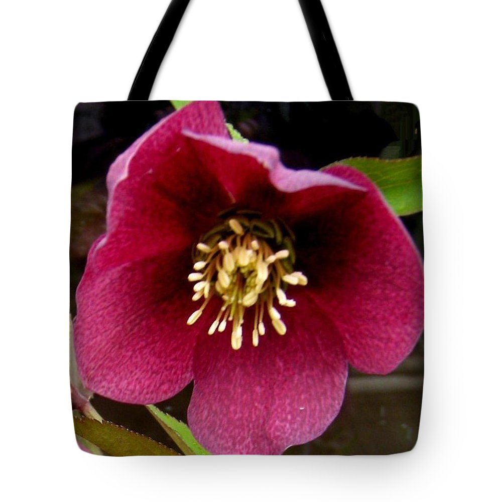 Lenten Rose Tote Bag featuring the photograph Lenten Rose by Sandra Maddox