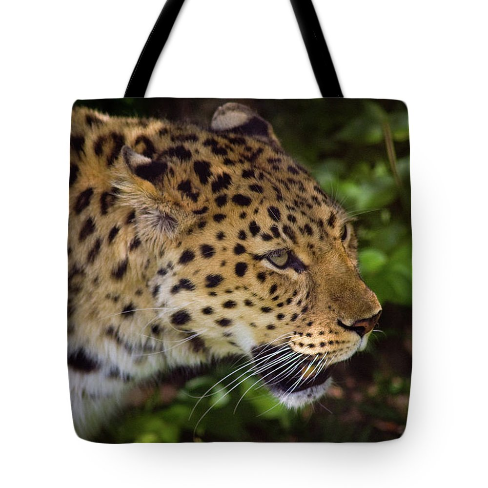 Leopard Tote Bag featuring the photograph Leopard by Steve Stuller