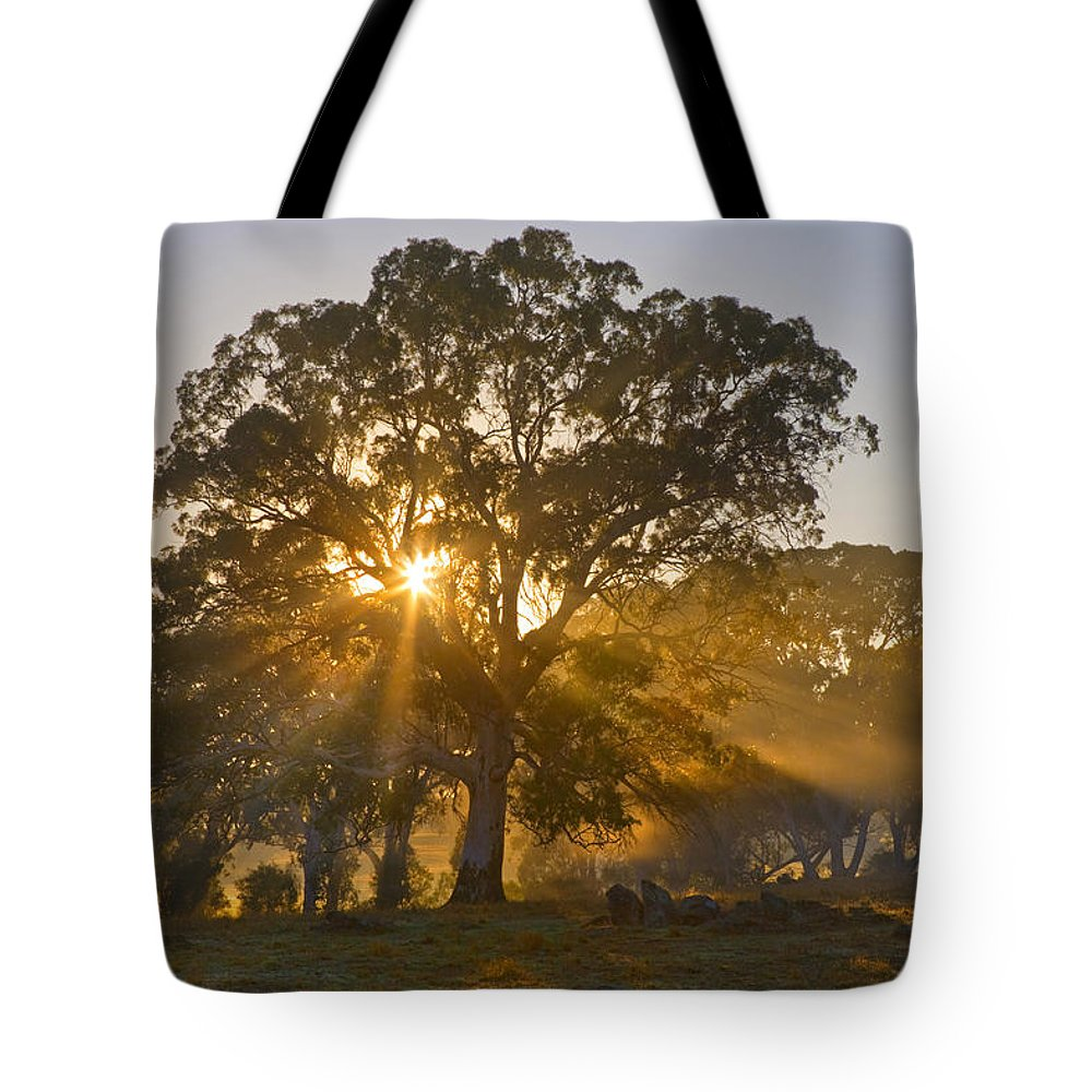 Tree Tote Bag featuring the photograph Let There Be Light by Mike Dawson