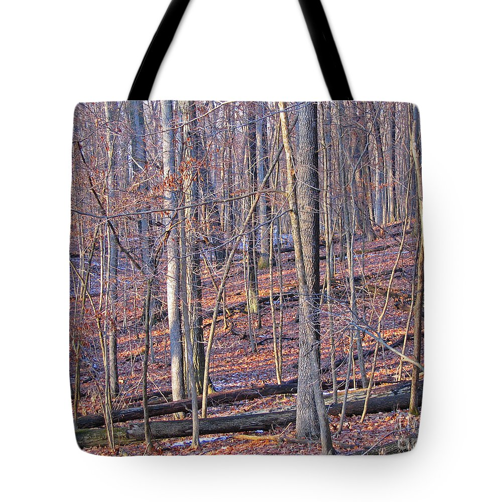 Woods Tote Bag featuring the photograph Letting The Light In by Ann Horn
