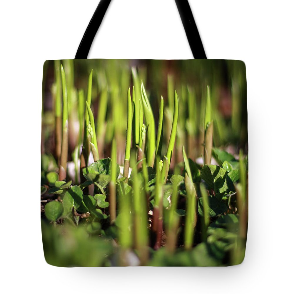 Spring Tote Bag featuring the photograph Light Of Spring by Martina Schneeberg-Chrisien