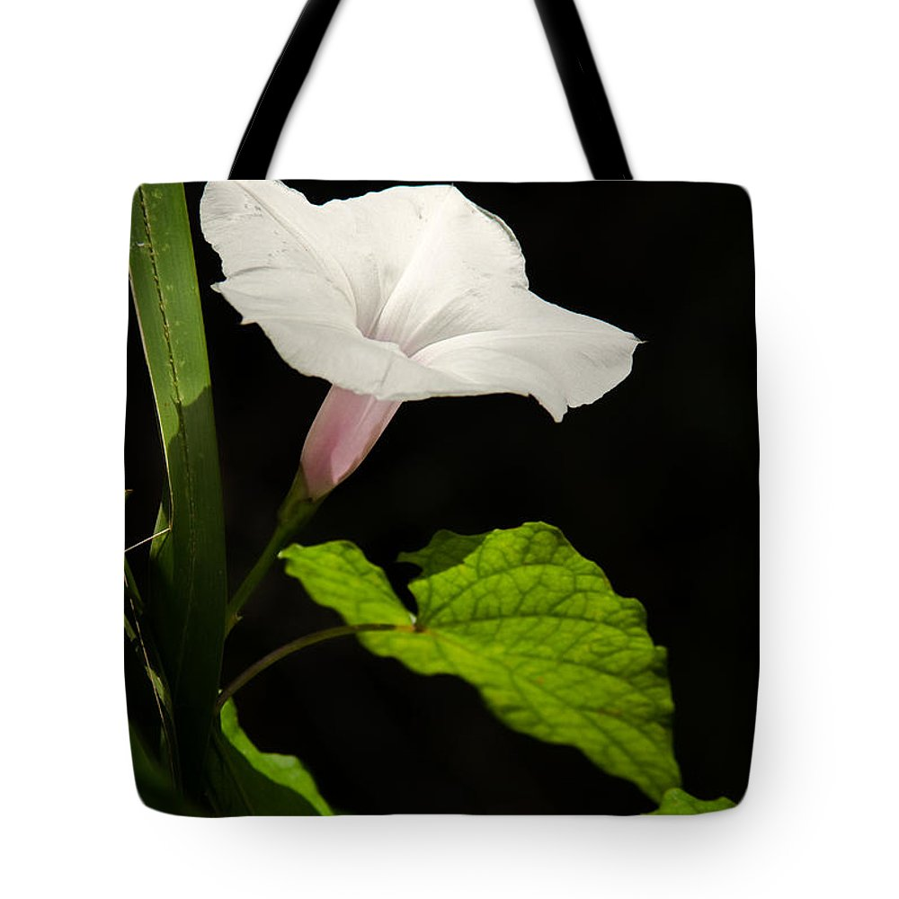 Flower Tote Bag featuring the photograph Light Out Of The Dark by Christopher Holmes