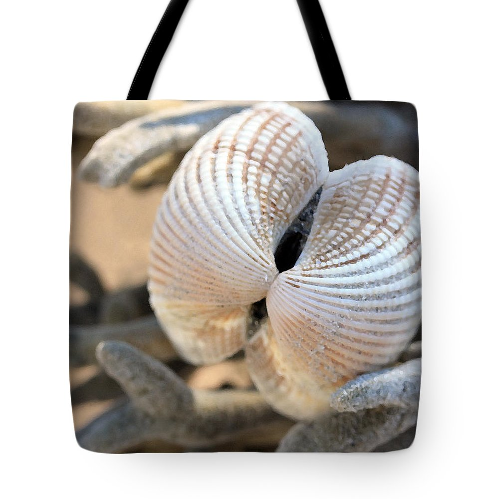 Shells Tote Bag featuring the photograph Like Angel Wings by Mary Haber