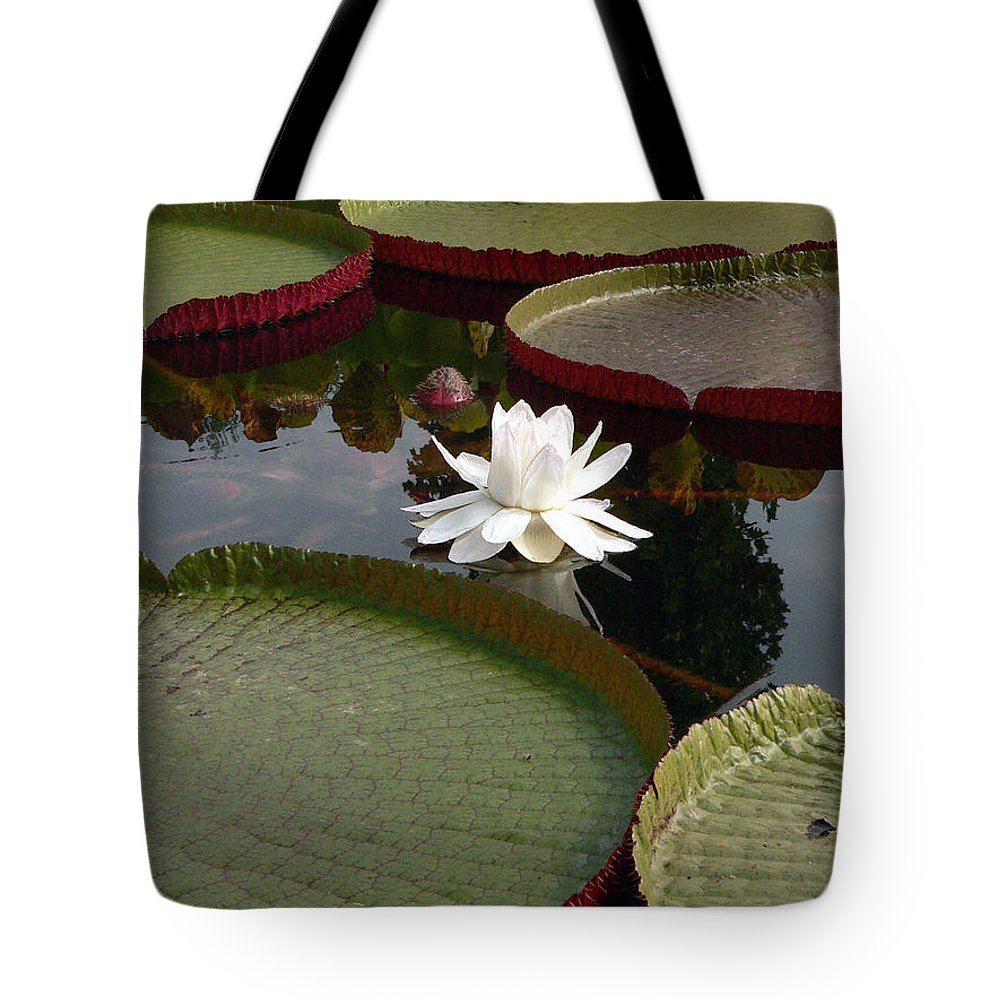 Water Lily Tote Bag featuring the photograph Lily by David Bearden