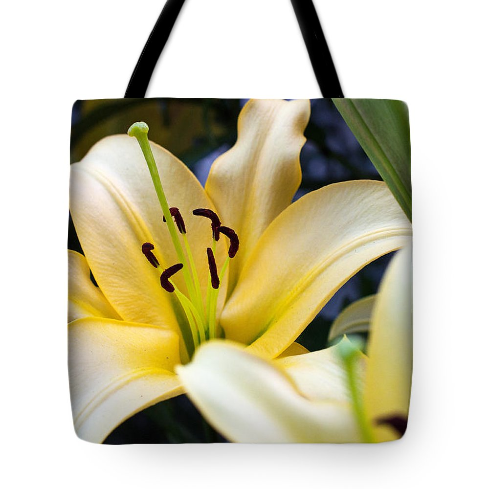 Lily Tote Bag featuring the photograph Lily Splendor by Edward Congdon