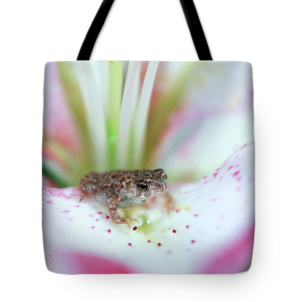 Toad Tote Bag featuring the photograph Lily Toad by Martina Schneeberg-Chrisien