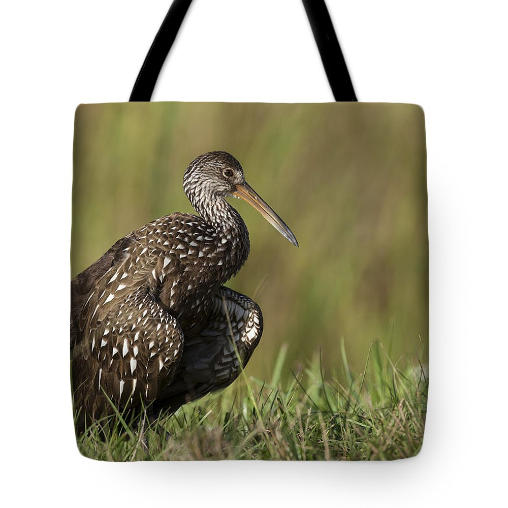 Limpkin Tote Bag featuring the photograph Limpkin Stretching In The Grass by David Watkins