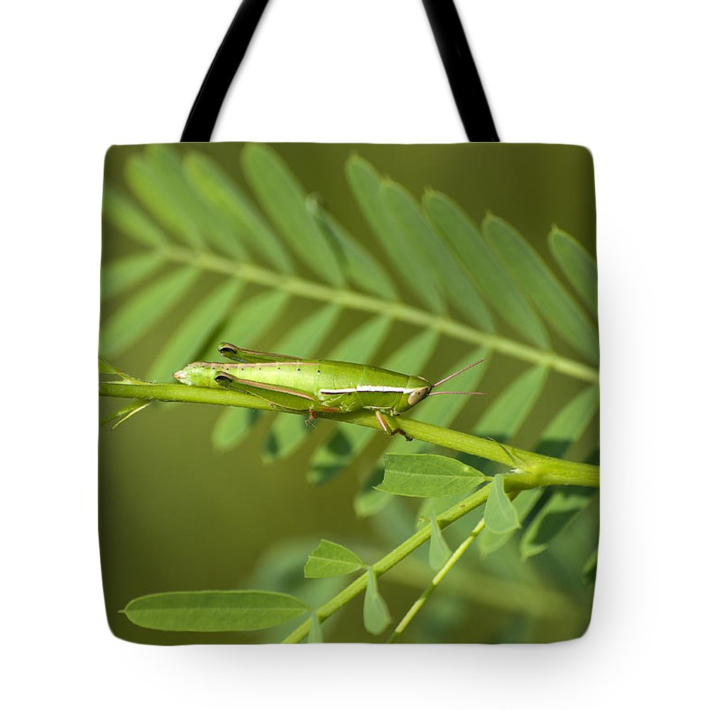 Grasshopper Tote Bag featuring the photograph Linear Winged Grasshopper by Kenneth Albin