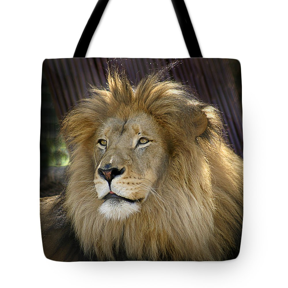 Zoo Tote Bag featuring the photograph Lion by Anthony Jones