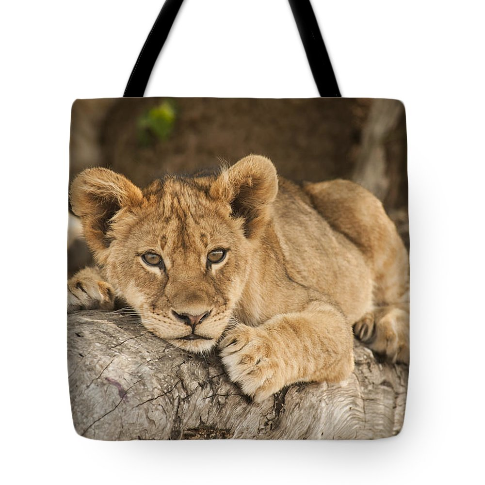 Lion Cub Resting On Tree Branch Tote Bag for Sale by ...