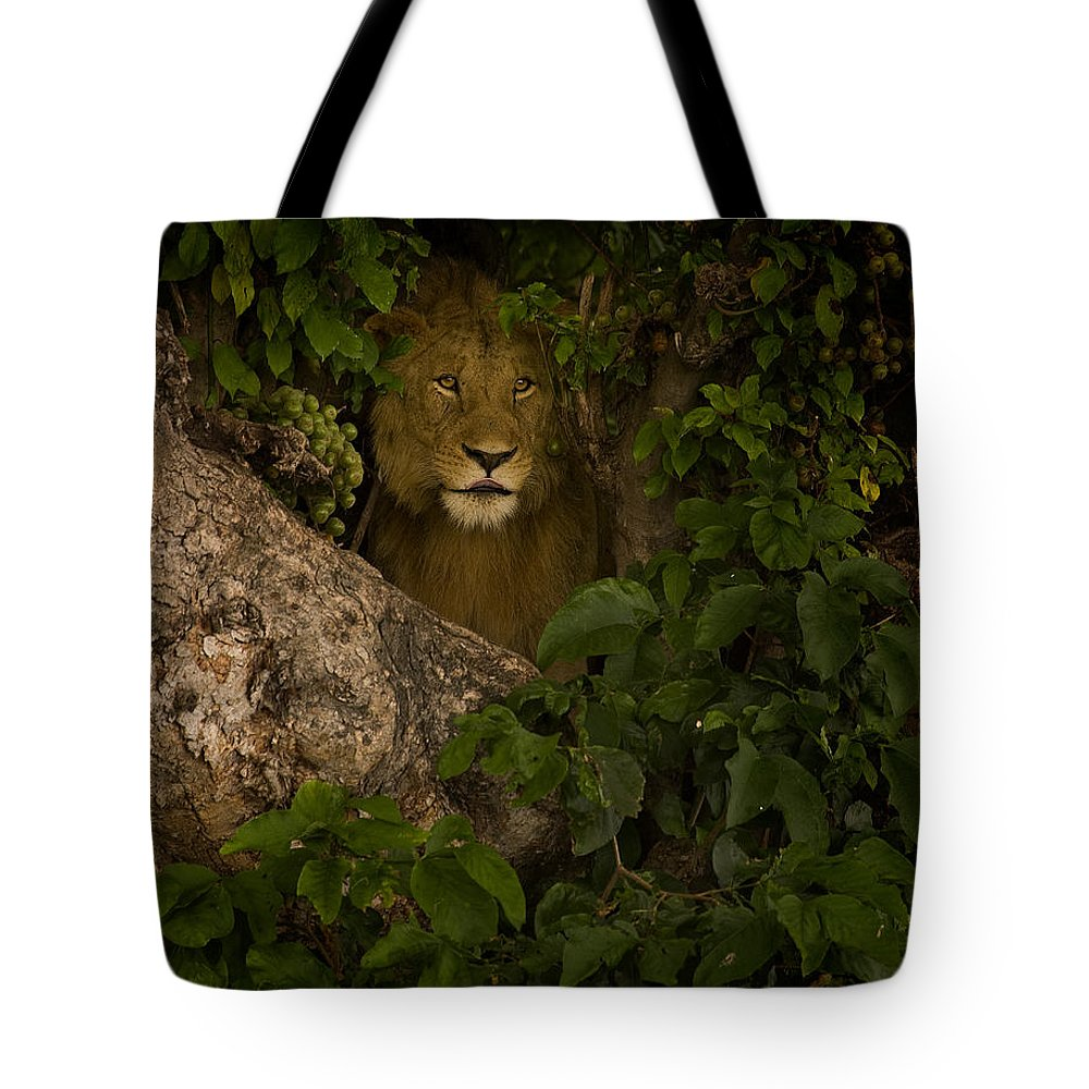 Panthera Leo Tote Bag featuring the photograph Lion In A Tree-signed by J L Woody Wooden