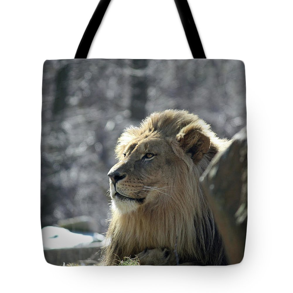 Maryland Tote Bag featuring the photograph Lion King by Ronald Reid
