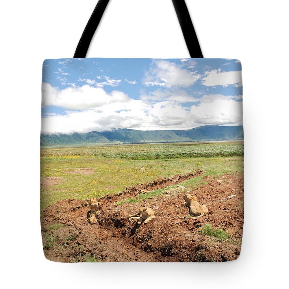 Lions Tote Bag featuring the photograph Lion Landscape by Marc Levine