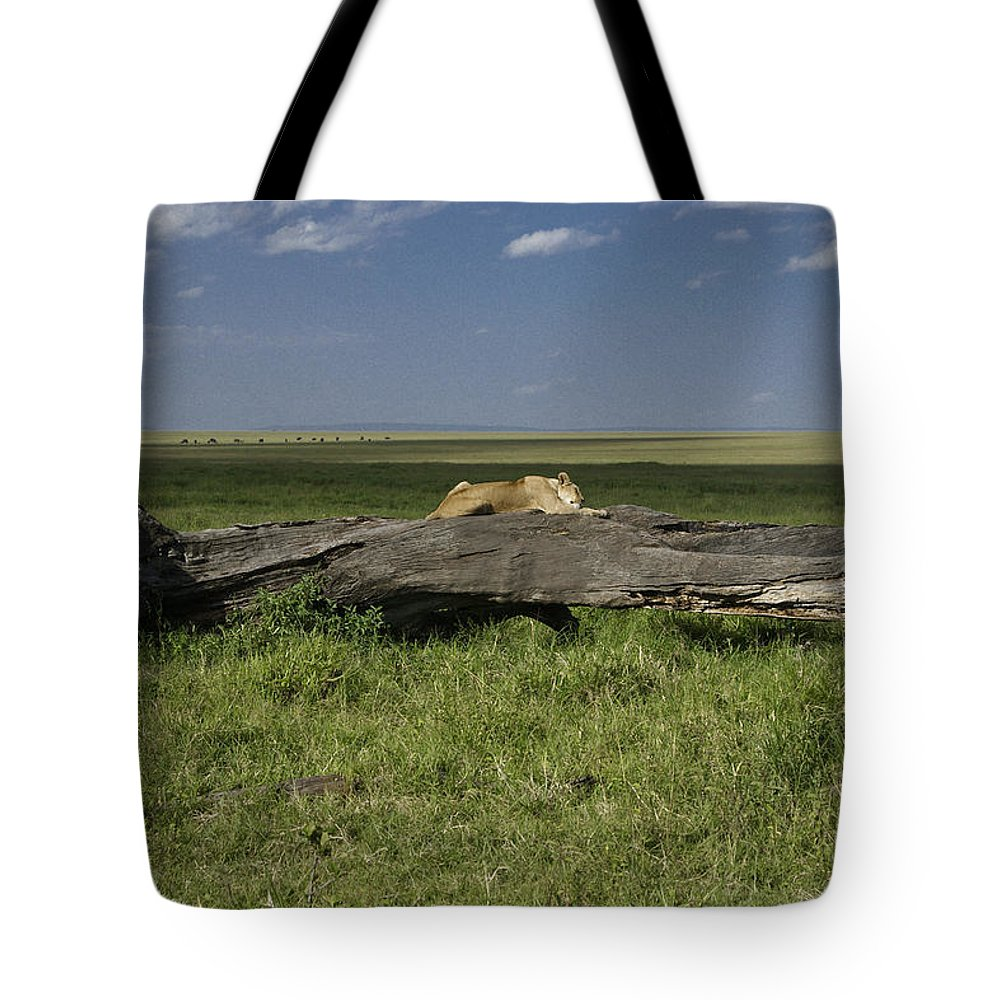 Africa Tote Bag featuring the photograph Lion on a Log by Michele Burgess