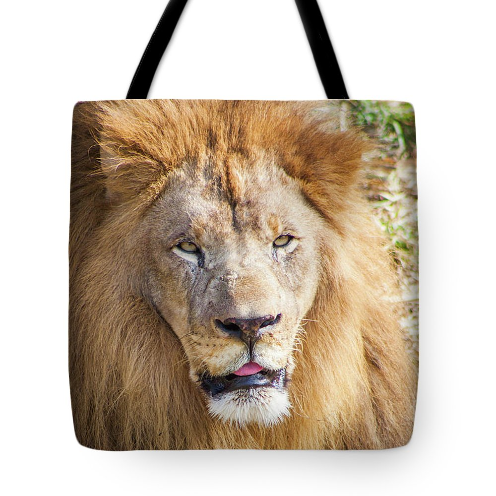 Lion Tote Bag featuring the photograph Lion Portrait by Kimberly Blom-Roemer