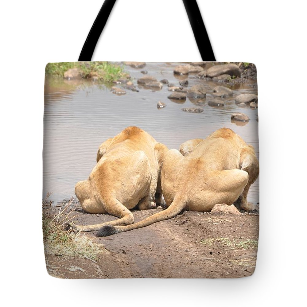 Lion Tote Bag featuring the photograph Lion by Rachel Young