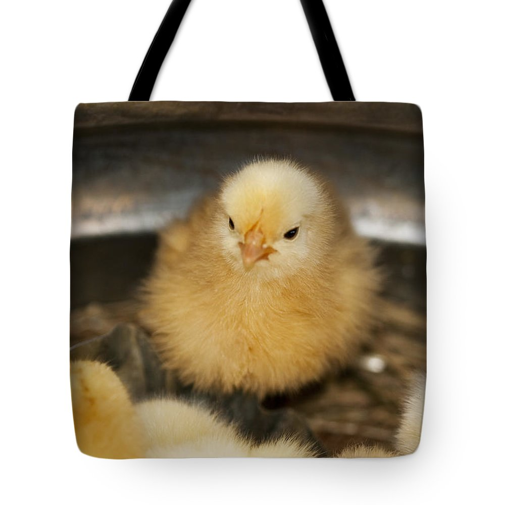 Chick Tote Bag featuring the photograph Little Baby Peep by Kathy Clark