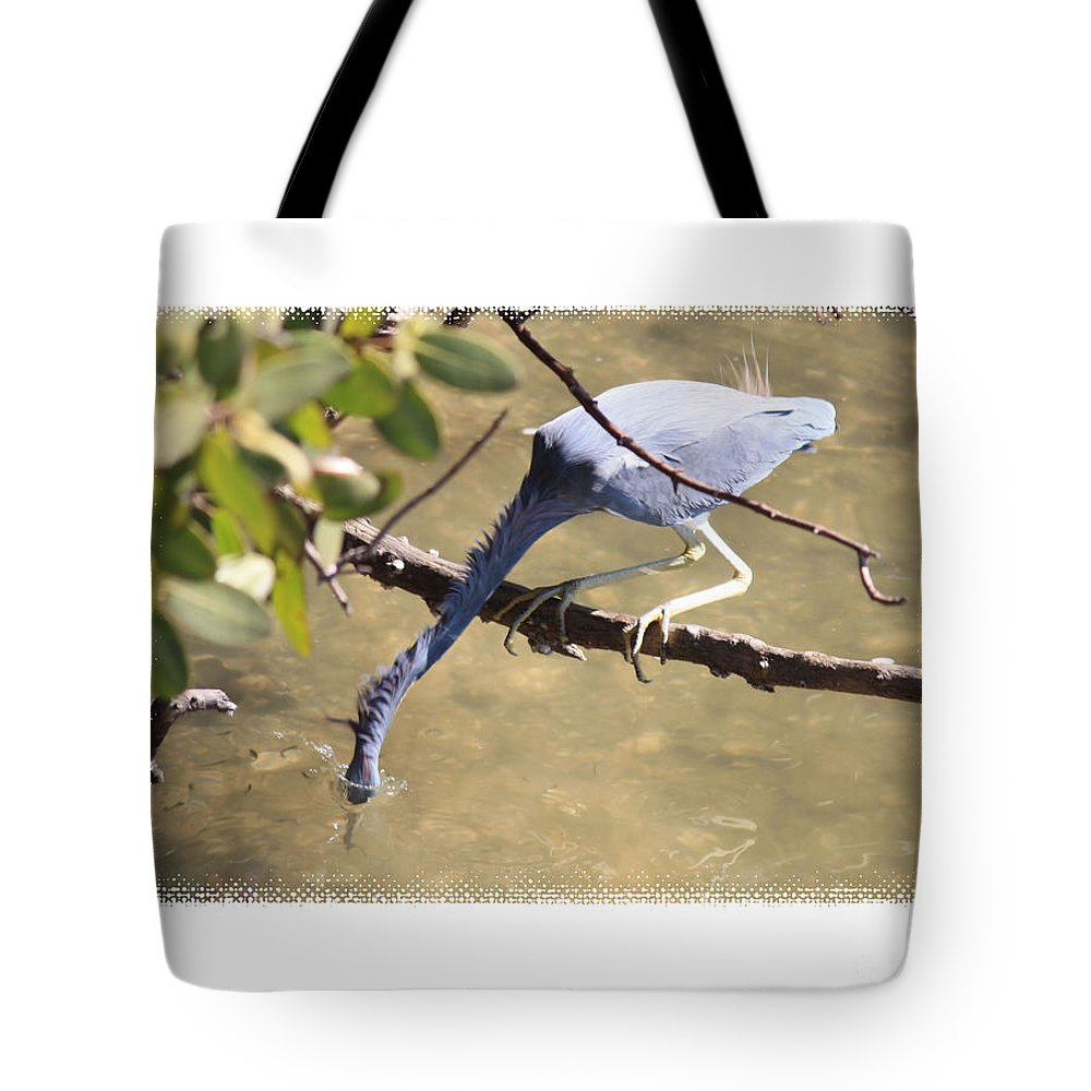 Little Blue Heron Tote Bag featuring the photograph Little Blue Heron Going For Fish With Framing by Carol Groenen