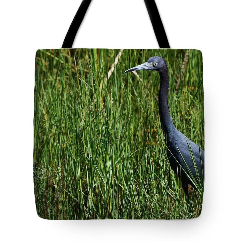 Little Blue Heron Tote Bag featuring the photograph Little Blue by Melanie Moraga