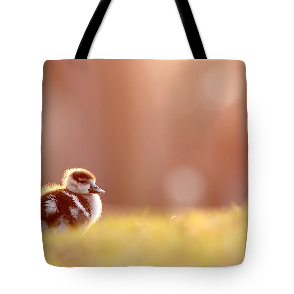 e010602bb795 Little Furry Animal - Gosling In Warm Light Tote Bag for Sale by Roeselien  Raimond
