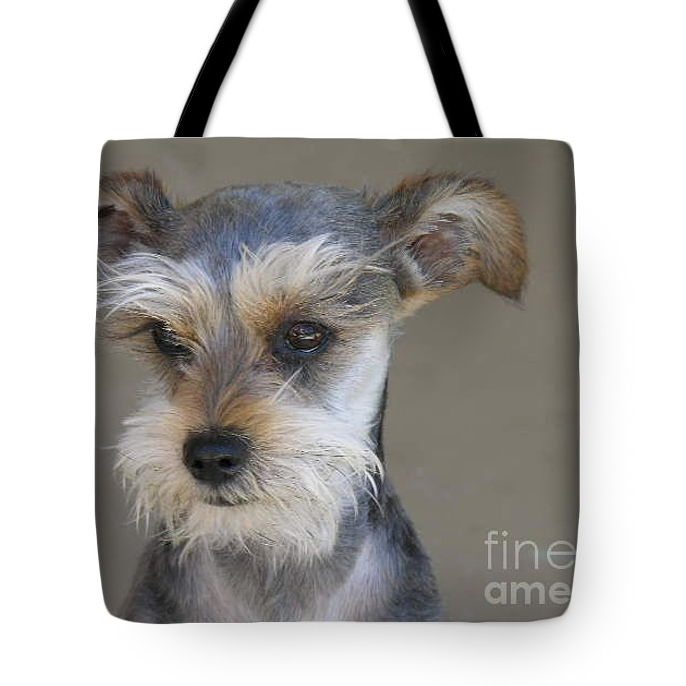 Schnausher Tote Bag featuring the photograph Little Guy by Diane Greco-Lesser