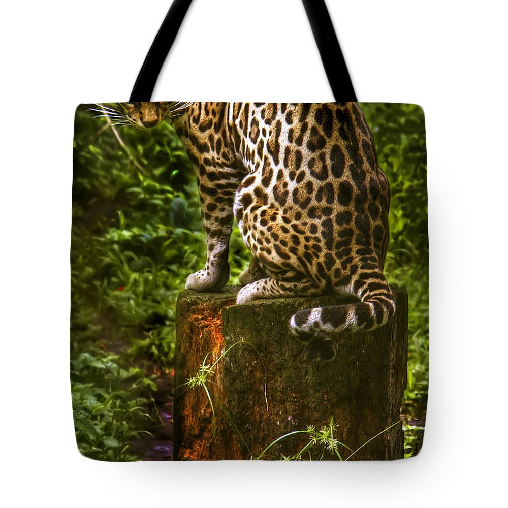 Maguay Tote Bag featuring the photograph Little Lottie by Dolly Sanchez