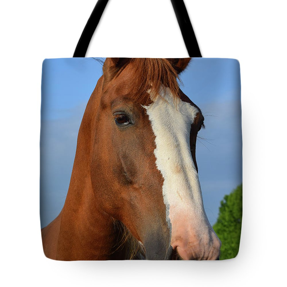 Horse Tote Bag featuring the photograph Little Mare by Chris Busch