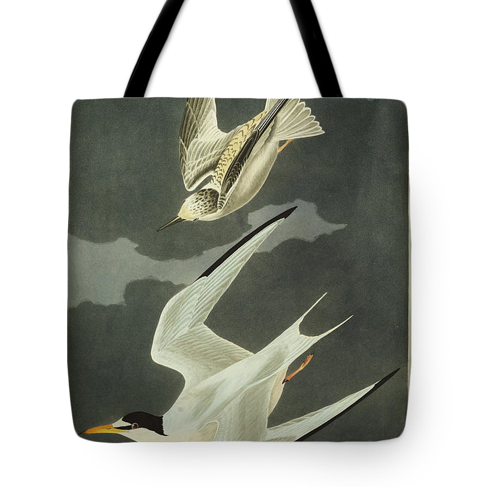 Lesser Tern. Lesser Tern. Little Tern (sterna Albifrons) From 'the Birds Of America' (aquatint & Engraving With Hand-colouring) By John James Audubon (1785-1851) Tote Bag featuring the drawing Little Tern by John James Audubon