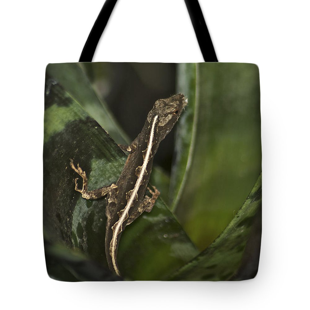 Wildlife Tote Bag featuring the photograph Lizard 2 by Michael Peychich