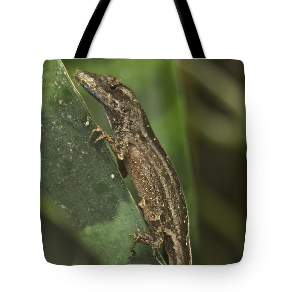 Wildlife Tote Bag featuring the photograph Lizard 3 by Michael Peychich
