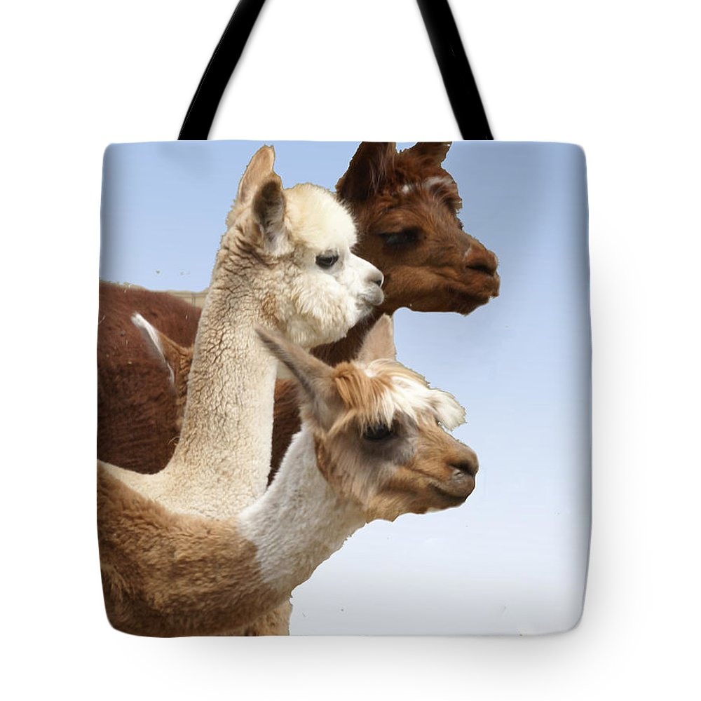 Llama Tote Bag featuring the photograph Llama's Three by Heather Coen