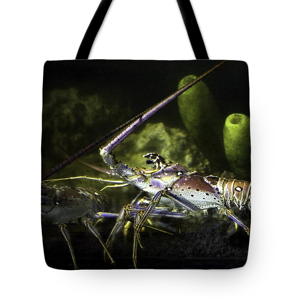 Lobster Tote Bag featuring the photograph Lobster In Love by Marilyn Hunt