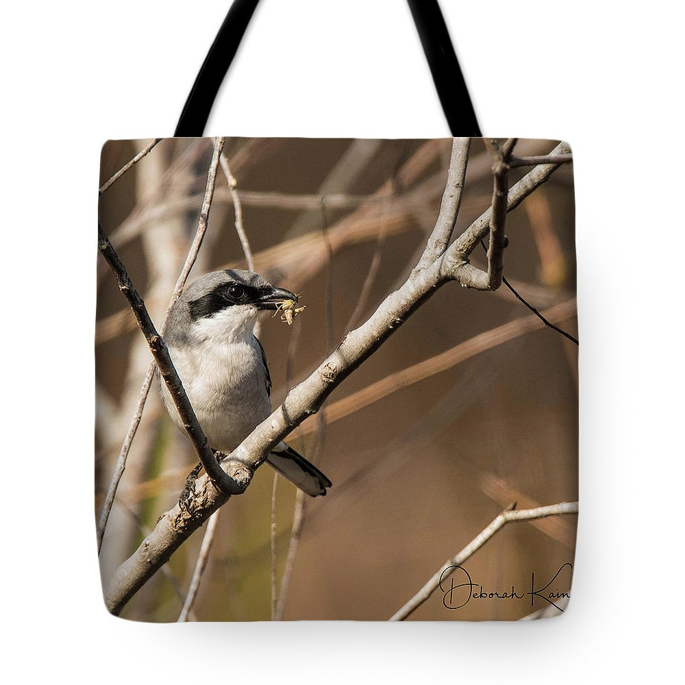 Florida Tote Bag featuring the photograph Loggerhead Shrike by Deborah Kainauskas