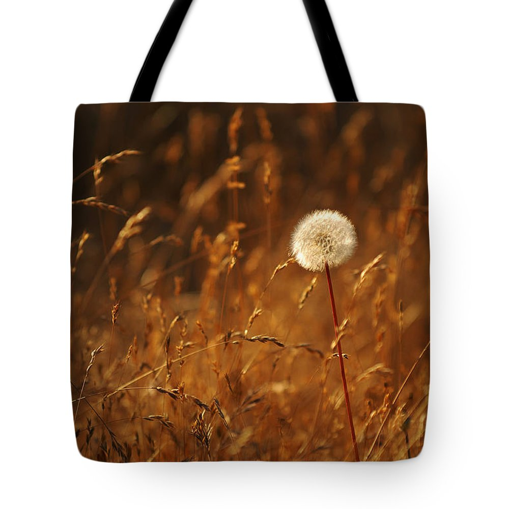 Nature Outdoors Field Dandelion Alone Single Sole Botanical Tote Bag featuring the photograph Lone Dandelion by Jill Reger