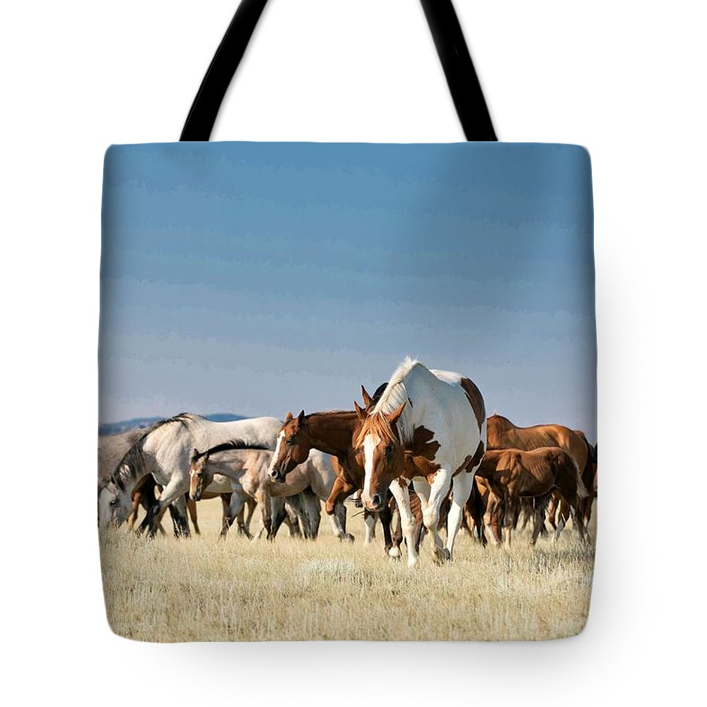 Paint Horse Tote Bag featuring the photograph Lone Paint by Terri Cage