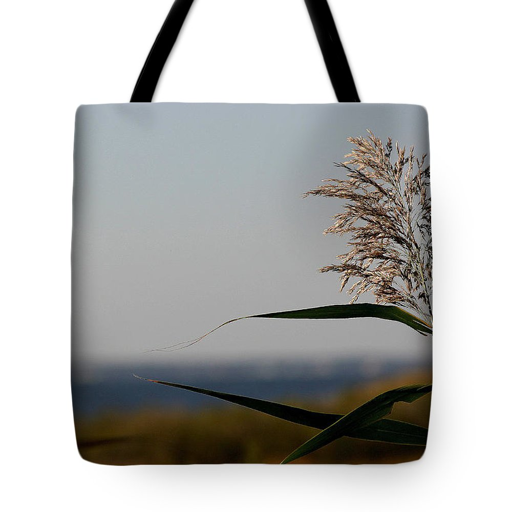 Seagrass Tote Bag featuring the photograph Lone Seagrass by Mary Haber
