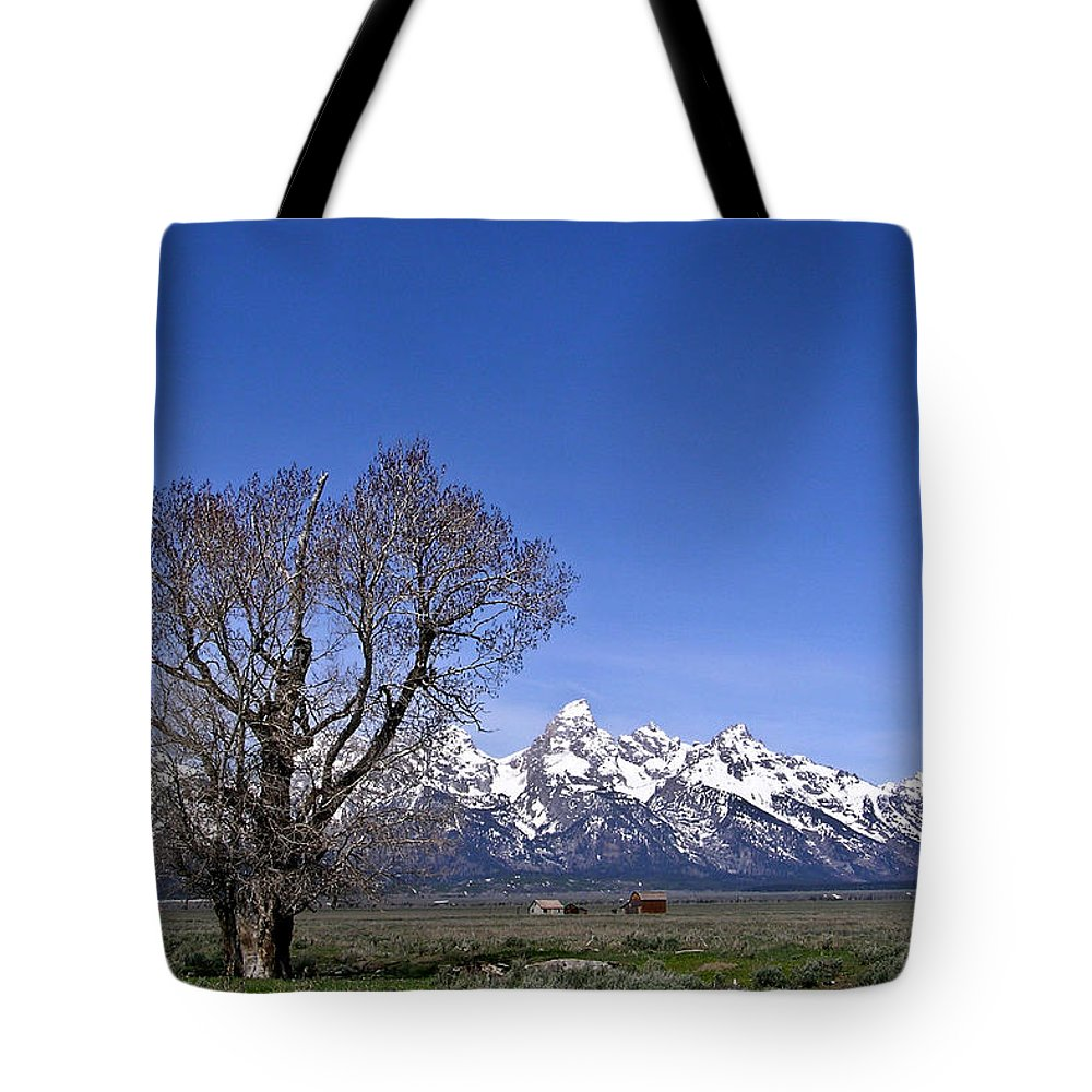 Tree Tote Bag featuring the photograph Lone Tree At Tetons by Douglas Barnett