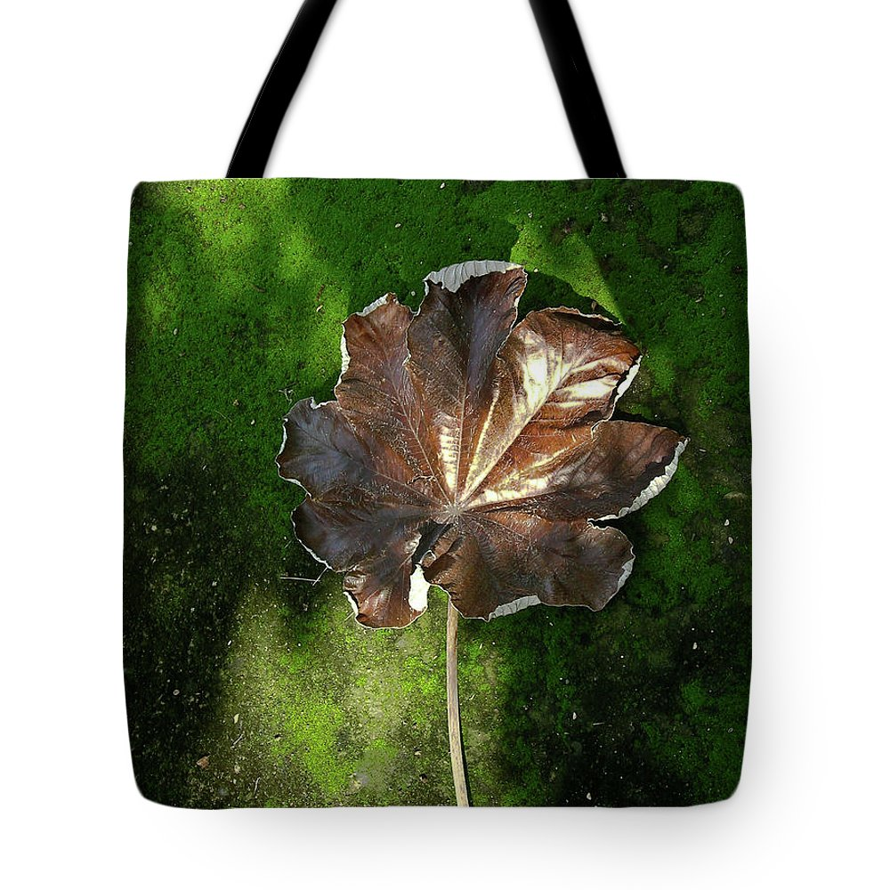 Lonely Tote Bag featuring the photograph Lonely Leaf On Moss by Douglas Barnett