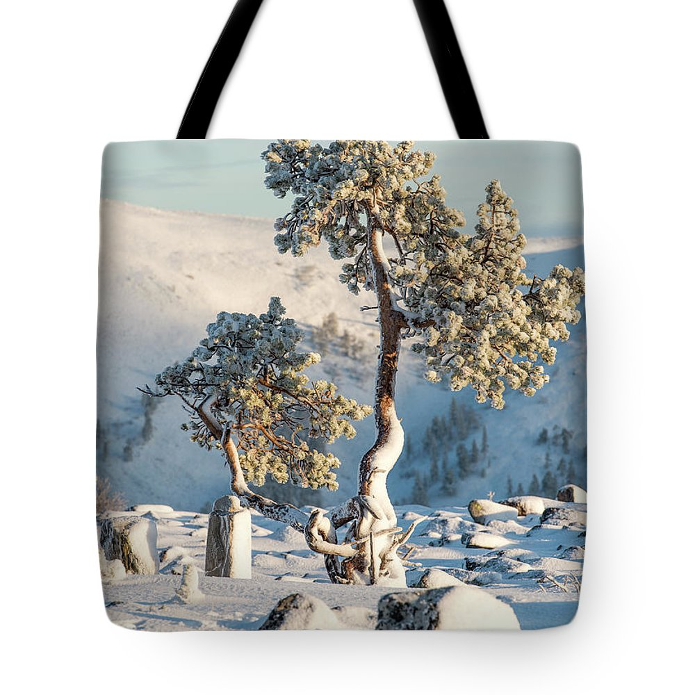 Pine Tote Bag featuring the photograph Lonely Pine On Top Of Fell Kellostapuli by Markus Kiili