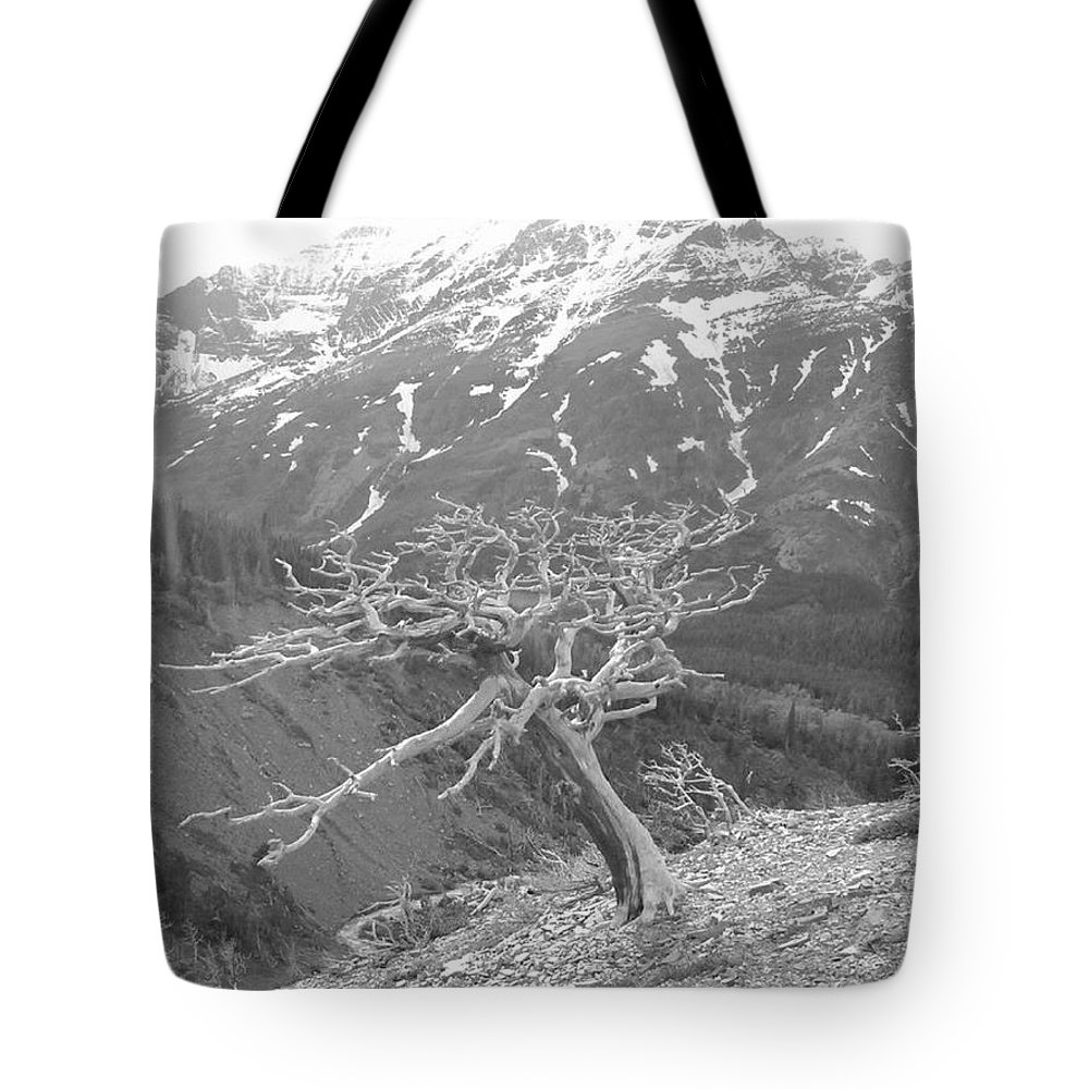 Mountains Tote Bag featuring the photograph Lonely Tree by Eric Fellegy