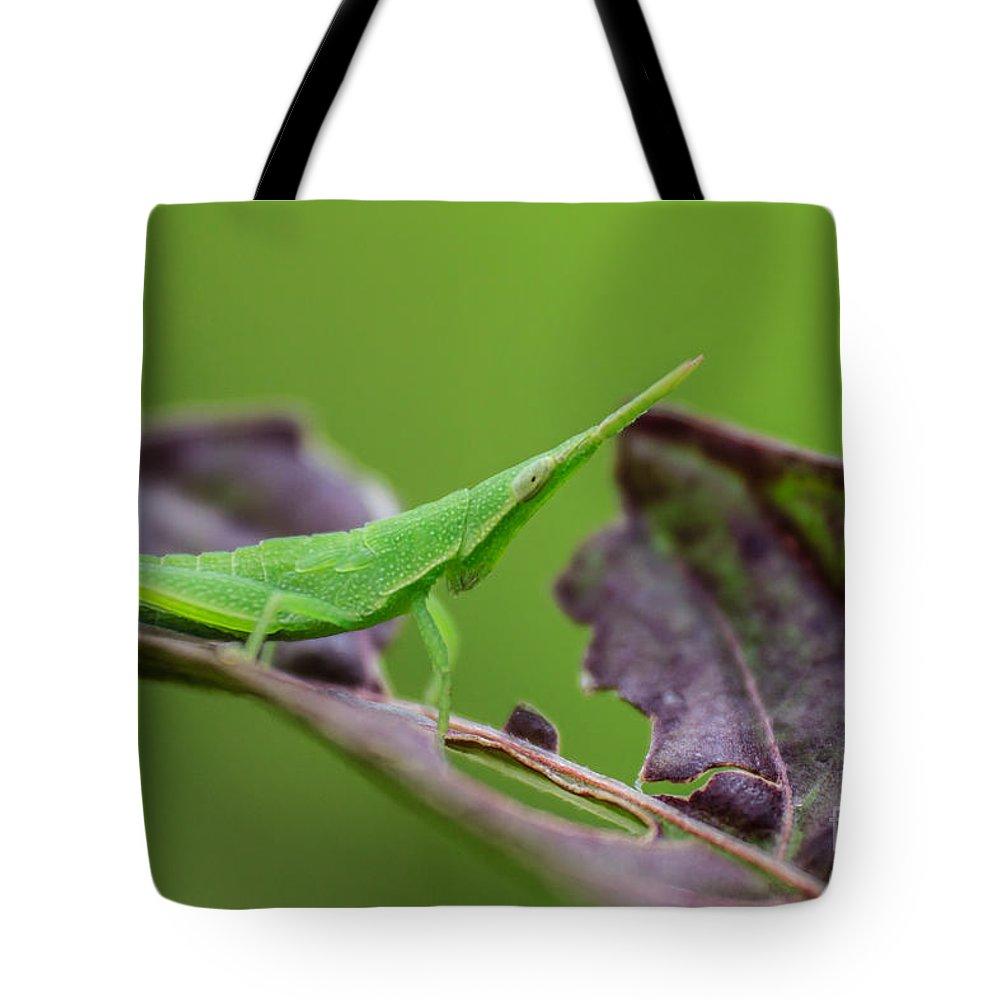 Macro Tote Bag featuring the photograph Long Grasshopper by Jordan Pigi